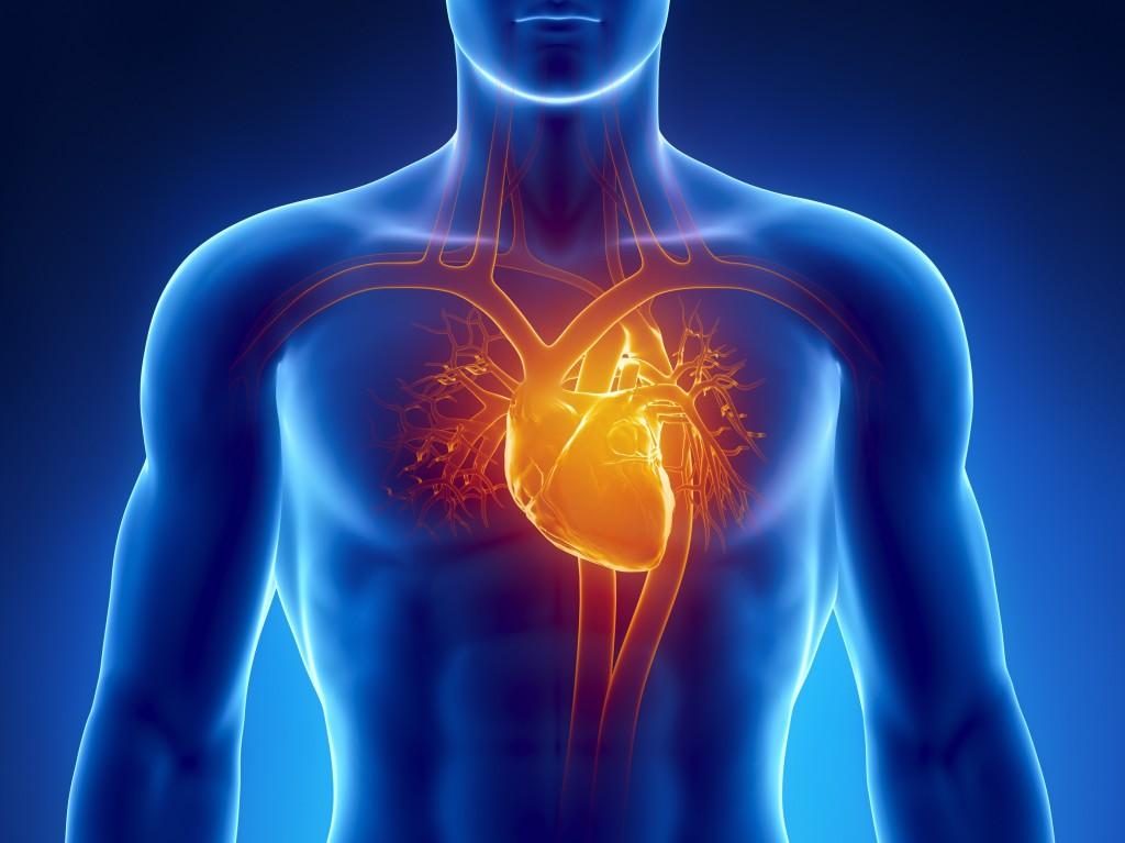 Тест: вы заботитесь о здоровье сердца?